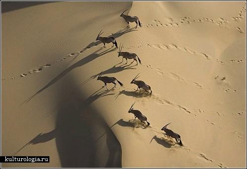 Африка сверху: фотографии от Майкла Полица