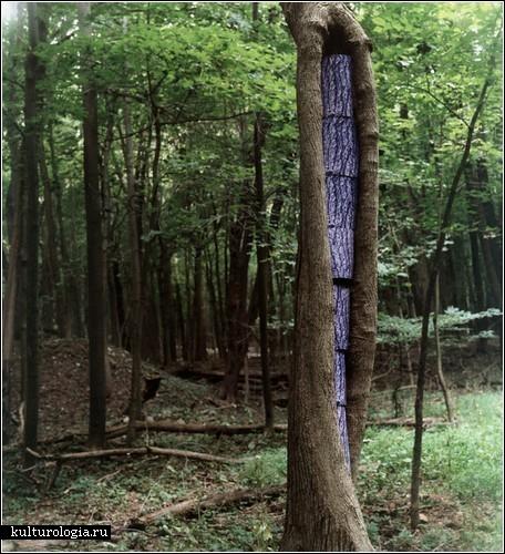 «ReSkinning Nature»: заплаты на деревьях от Бобби Нила Адамса