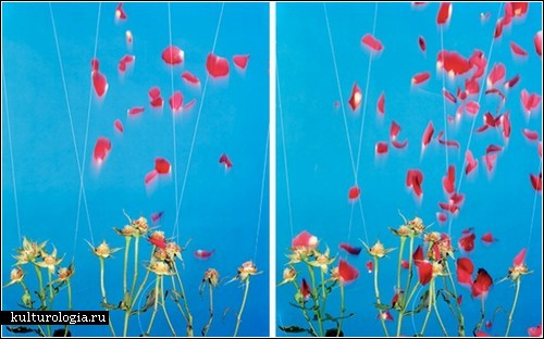 Разобранные объекты в фотопроекте Бена Иннеса «Separations»