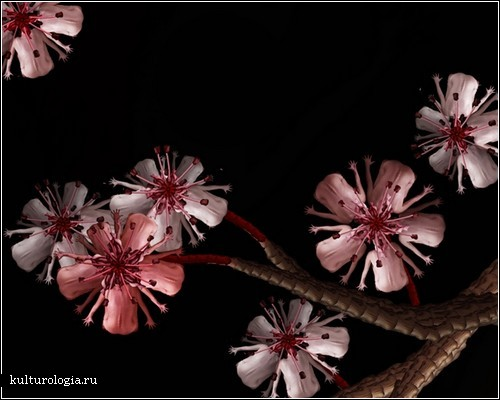 Люди-цветы в цифровых изображениях Сесилии Веббер