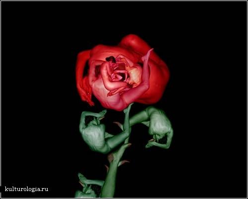 Люди цветы в цифровых изображениях
