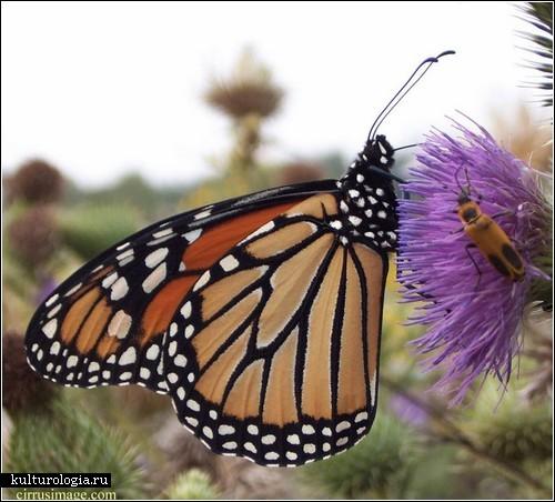 Платье-бабочка от Лули Янг