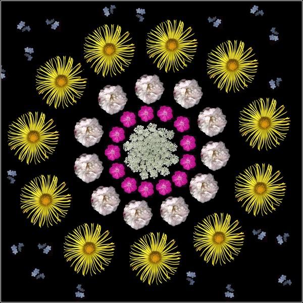 Цветы Портия собирает в собственном саду