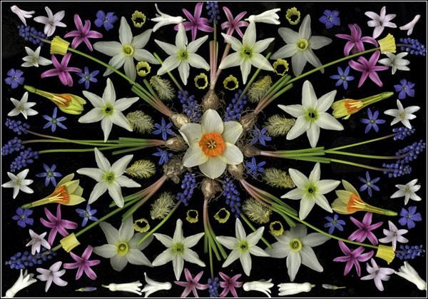 Мандалы из цветов