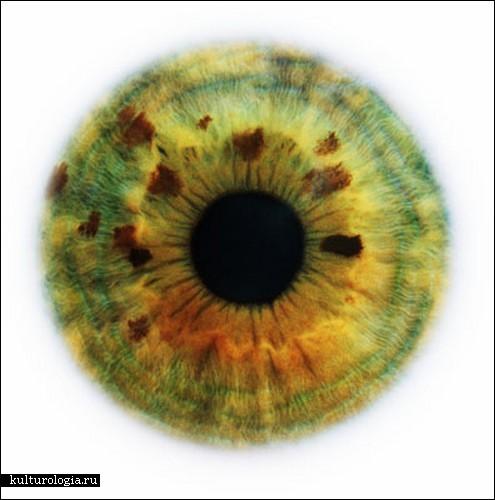 Глаза в глаза: фотопроект от Rankin