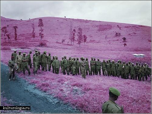 Война в сиреневых тонах: фотографии Ричарда Моссе