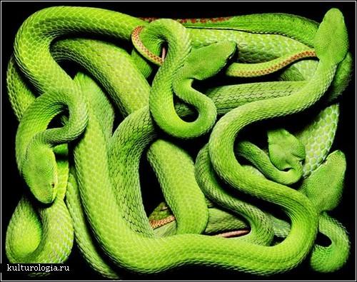 Змеи Гвидо Мокафико: красота, граничащая с ужасом