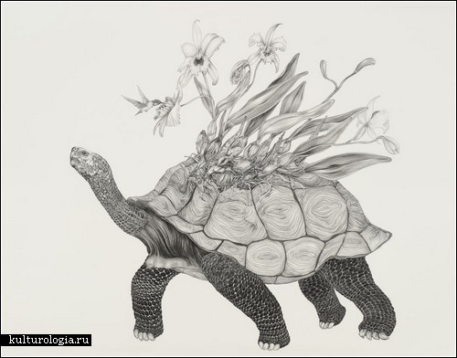 Животные + растения: рисунки карандашом от Тары Такер