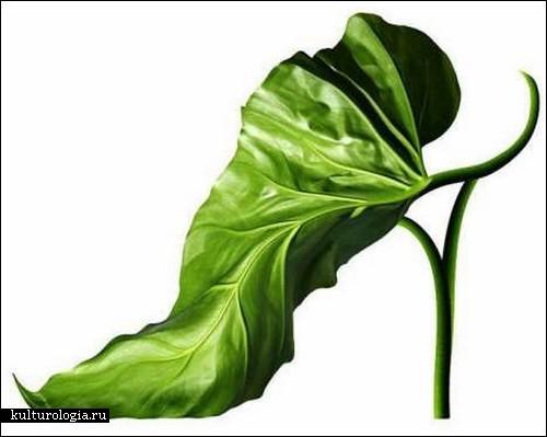 Обувь от Michel Tcherevkoff