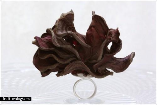 Необычные кольца из серебра и сухофруктов