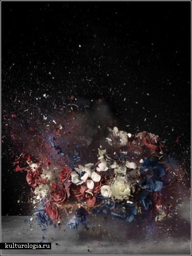 Взрывающиеся цветы. Фотофилософия Ори Гершта  (Ori Gersht)