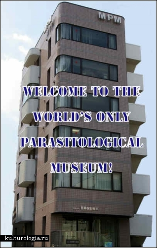 Самые странные музеи. Обзор