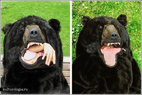 Спальный мешок Медведь