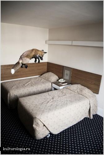 Фотопроект «Animalia» от Mikel Uribetxeberria