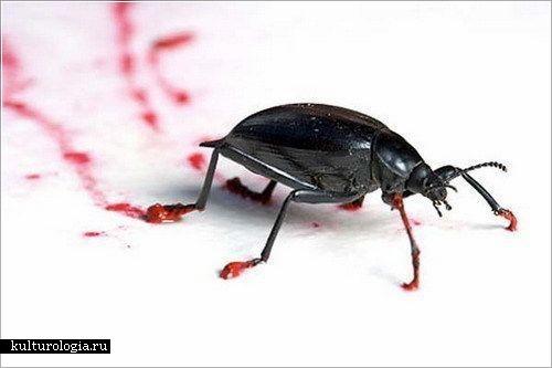 Абстрактные рисунки жука-художника