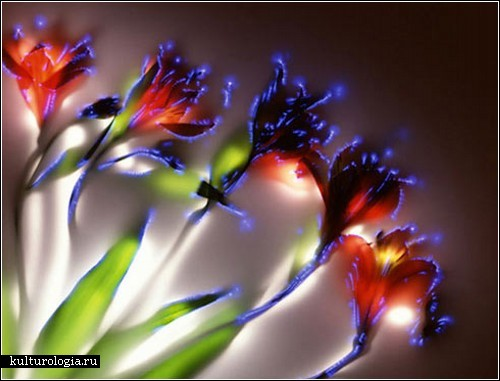 Цветы под напряжением. Фотокартины Robert Buelteman
