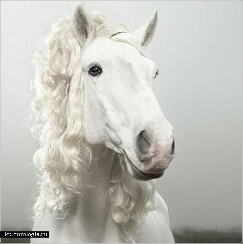 Фотографии модных и стильных лошадей от Джулиана Фолькенштейна (Julian Wolkenstein)