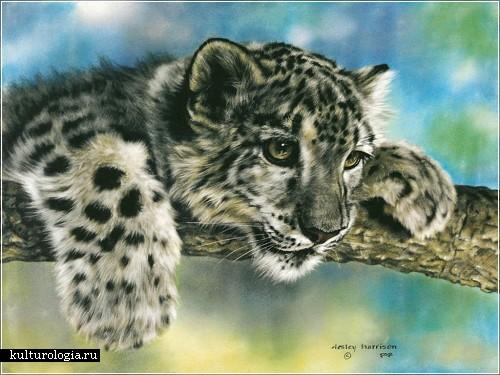 Картины животным, написанные пастелью. Художник Лесли Харрисон (Lesley Harrison)