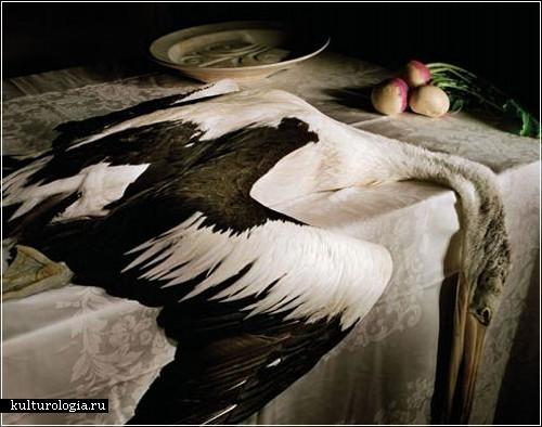 Фотографии-натюрморты Мариан Дру (Marian Drew)