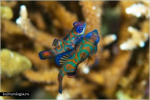 Фотография Michael Rosenfeld. Конкурc подводной фотографии Майамского университета 2009