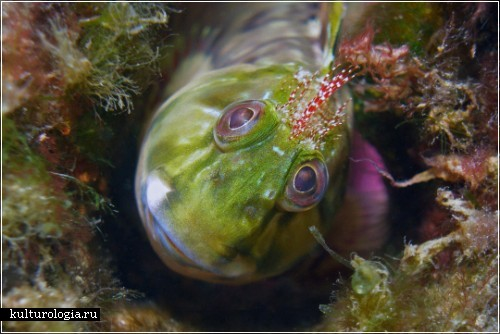 Фотография Judy Townsend. Конкурc подводной фотографии Майамского университета 2009