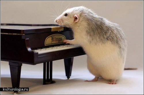 Фотографии крыс с музыкальными инструментами от Эллен ван Дилен (Ellen van Deelen)