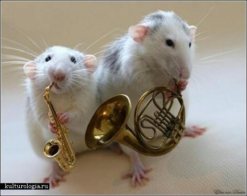 http://www.kulturologia.ru/files/oleczka/Rats/rats_music14.jpg