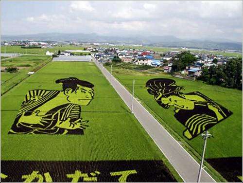 Креативные рисунки на рисовых полях