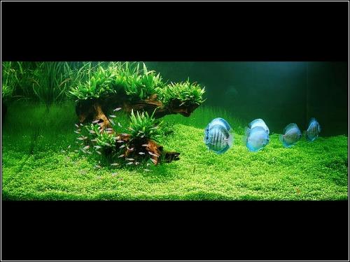 Акваскeйпинг - это искусство оформления аквариумов, при котором...