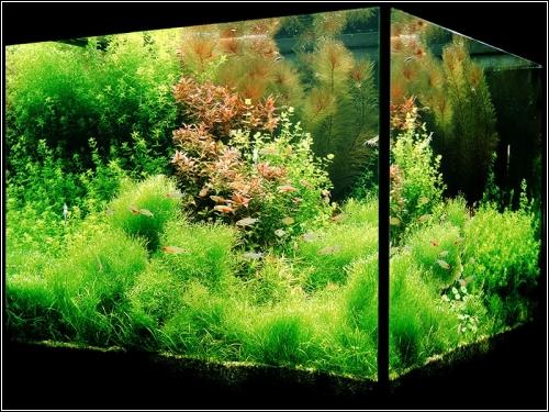 Обустройство аквариума подборка фото и видео оформление. АКВАРИУМНЫЕ