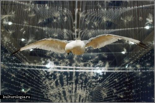 Висящие инсталляции британской художницы Клер Морган (Claire Morgan)