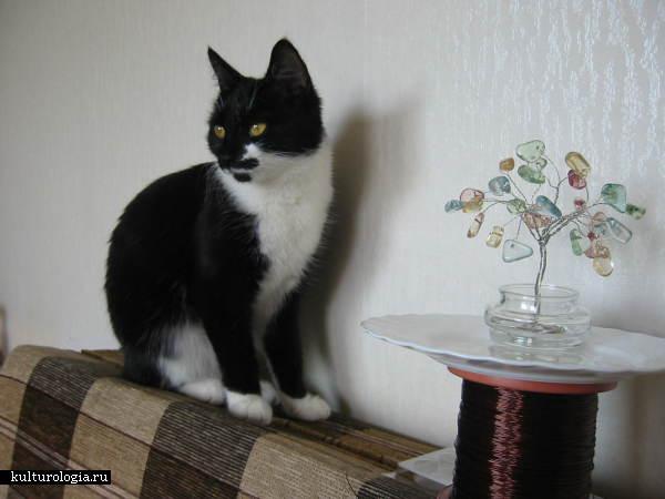 Нашей кошке Таше тоже интересно...