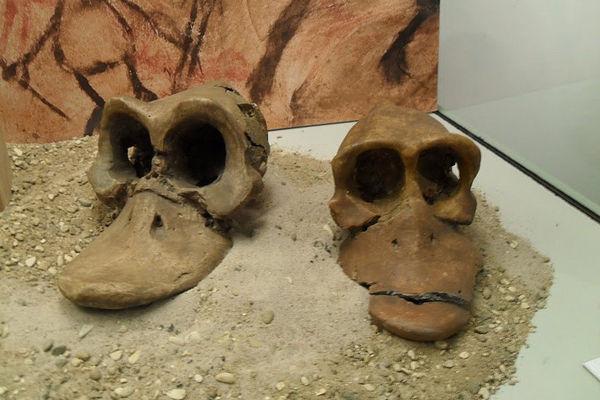 Ископаемые останки далеких предков Дональда Дака