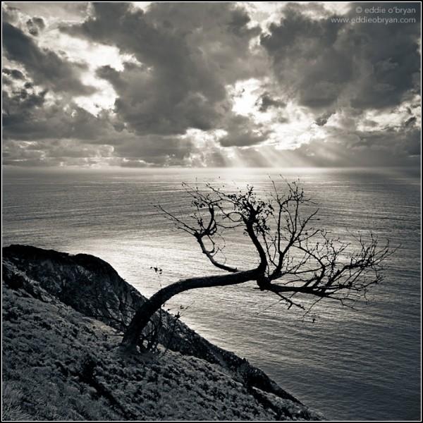 *Дерево на закате*