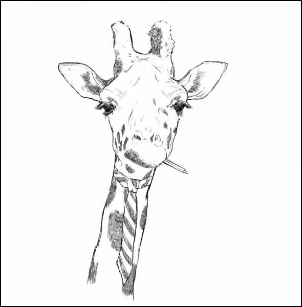 Забавные животные в иллюстрациях