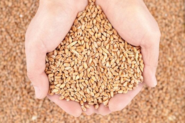 Зерно для бедняков бесплатно.