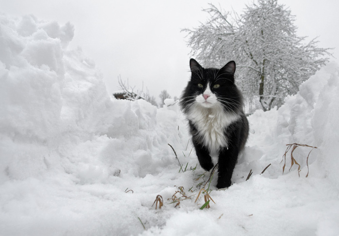 Кот учёный. / Фото: Артур.