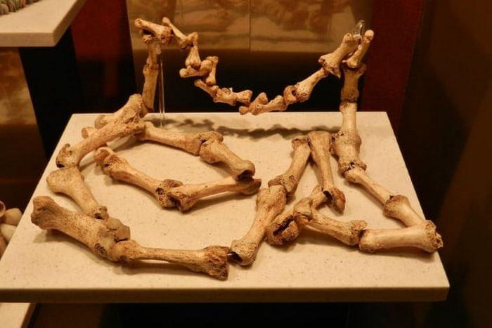 Кости в качестве ювелирных изделий.