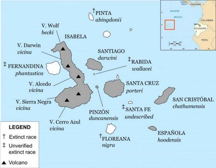 Карта Галапагосского архипелага с аннотированными в настоящее время видами галапагосских черепах. Острова с выжившими видами затенены.