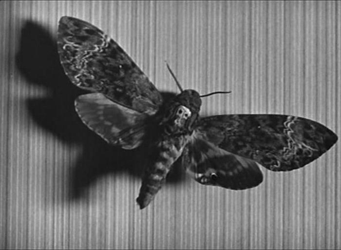 Кадр из фильма «Андалузский пес»