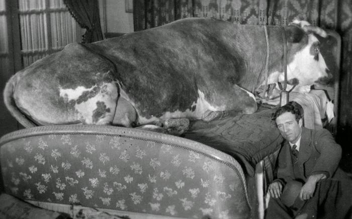Кадр из фильма «Золотой век».
