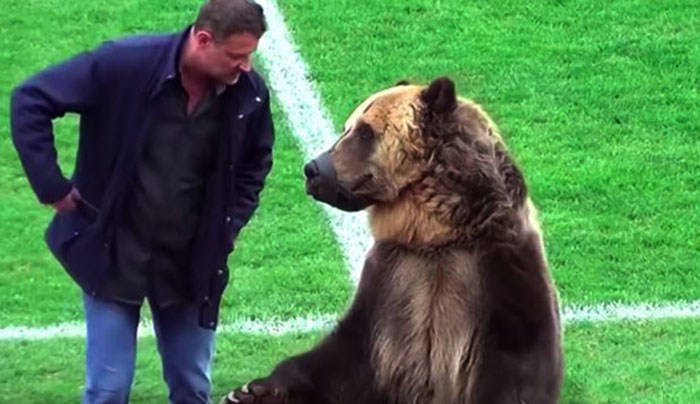 Медведь по кличке Тим на футбольном поле.