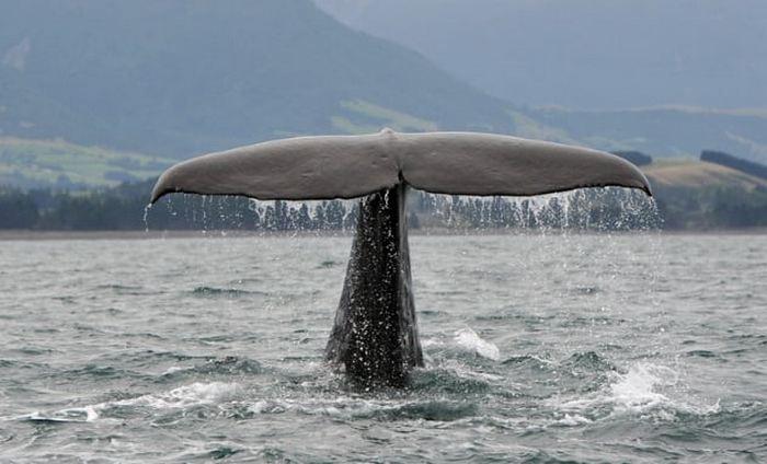 Помада из китовой ворвани.