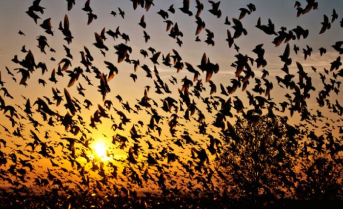 Почему тысячи пернатых, как под гипнозом, летят умирать в долину орхидей.