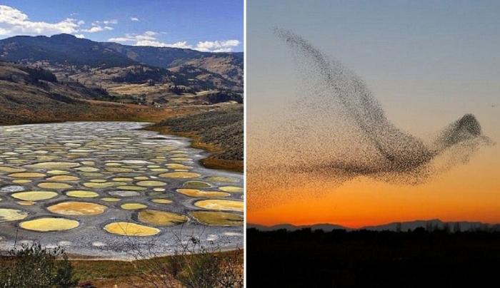 9 удивительных причуд природы, в реальность которых веришь с трудом.