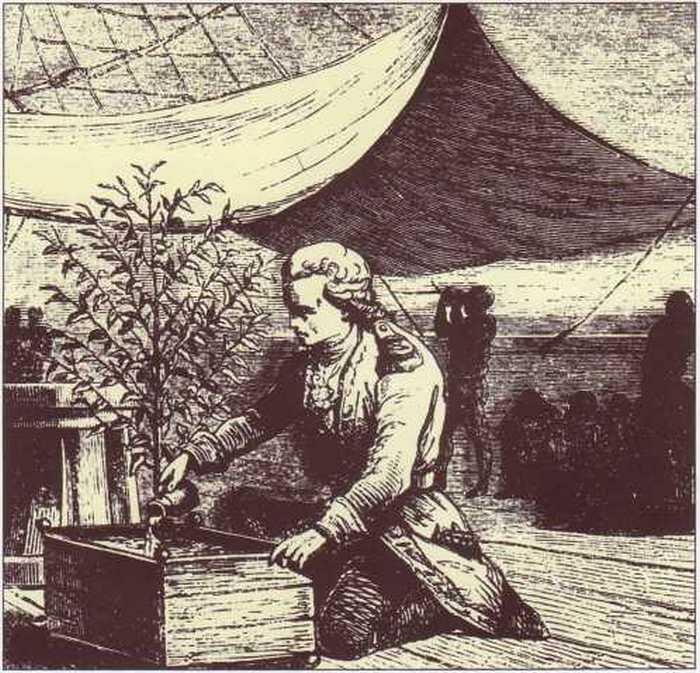 Габриэль де Кльё и его кофейное деревце.