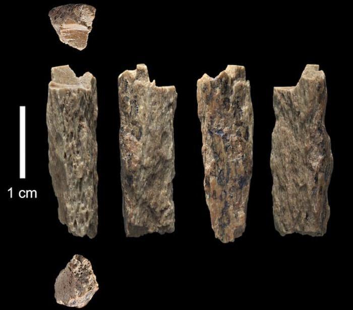 Фрагменты костей древних людей.