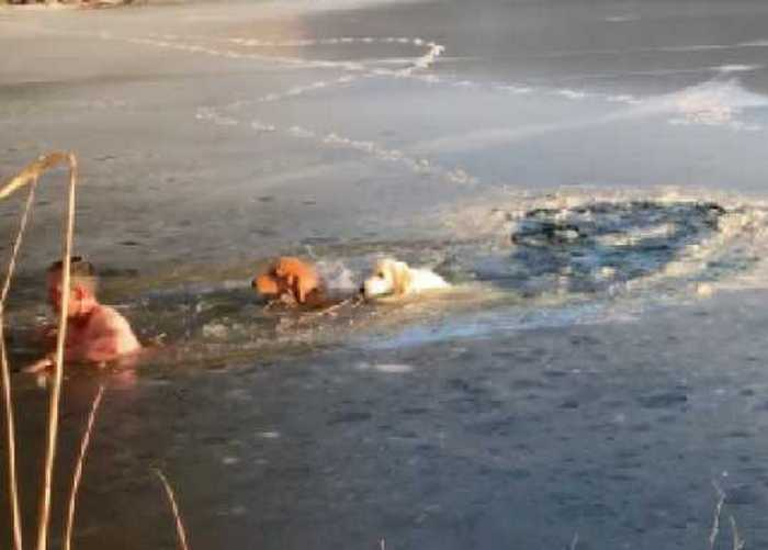 Собака Тимофея Юрьева всегда готова прийти на помощь своему хозяину.