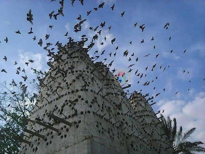 Египетские голубятни.
