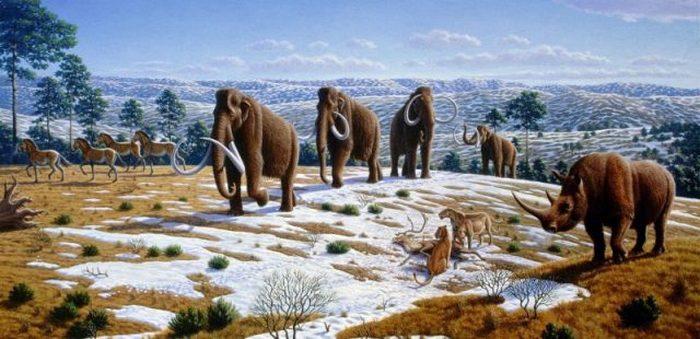 Считается, что шерстистые мамонты вымерли из-за изменения климата и антропогенного воздействия